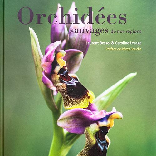 Orchidées sauvages de nos régions - Flammarion 2011